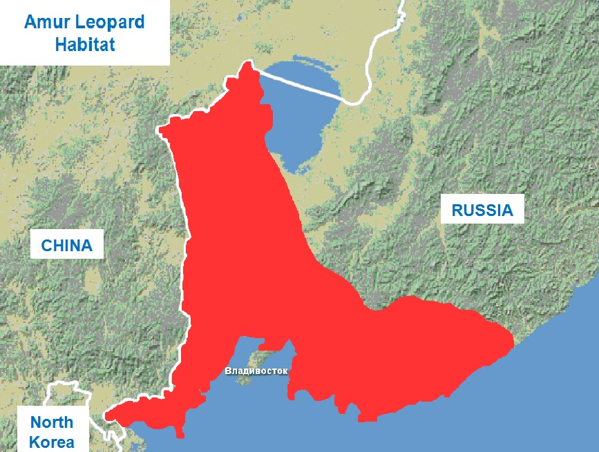 The area of ​​the Far Eastern leopard
