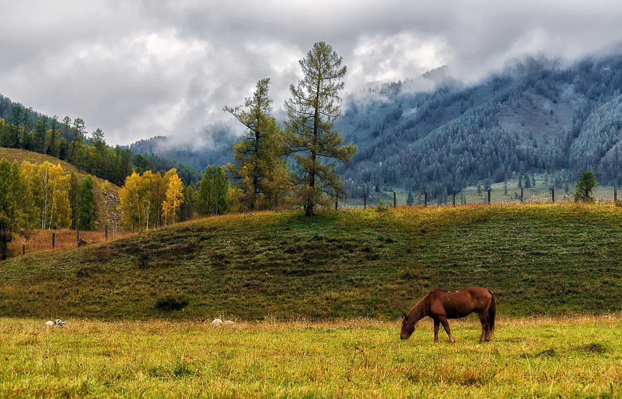 Altai's trademark – mountains and horses